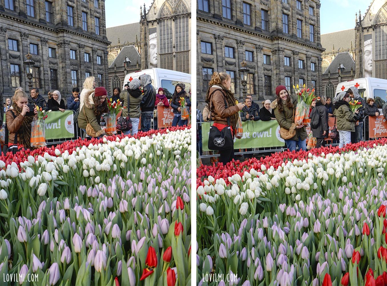 tulipan120