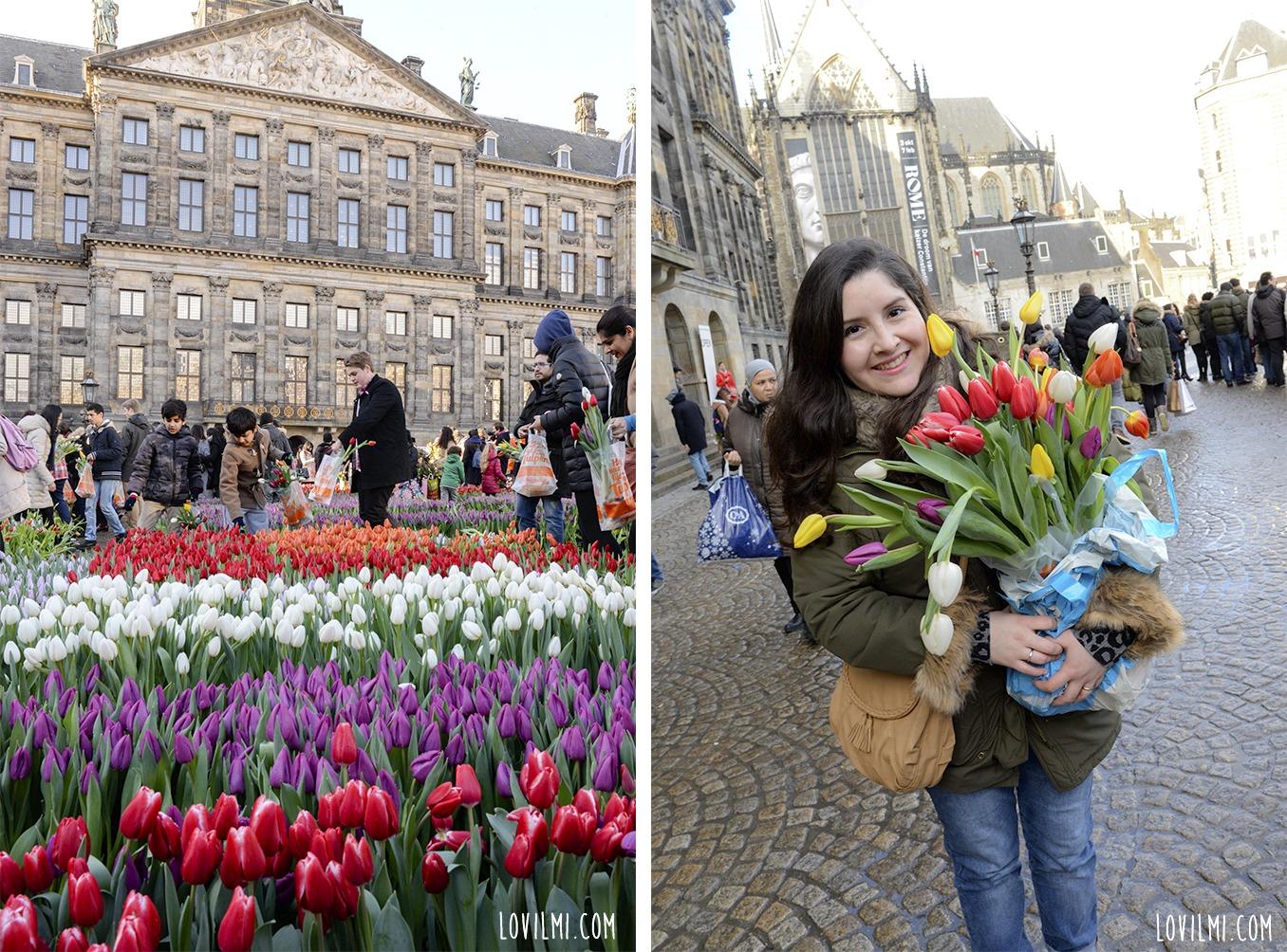 tulipan124