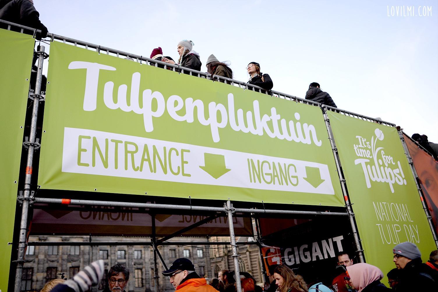 tulipan21