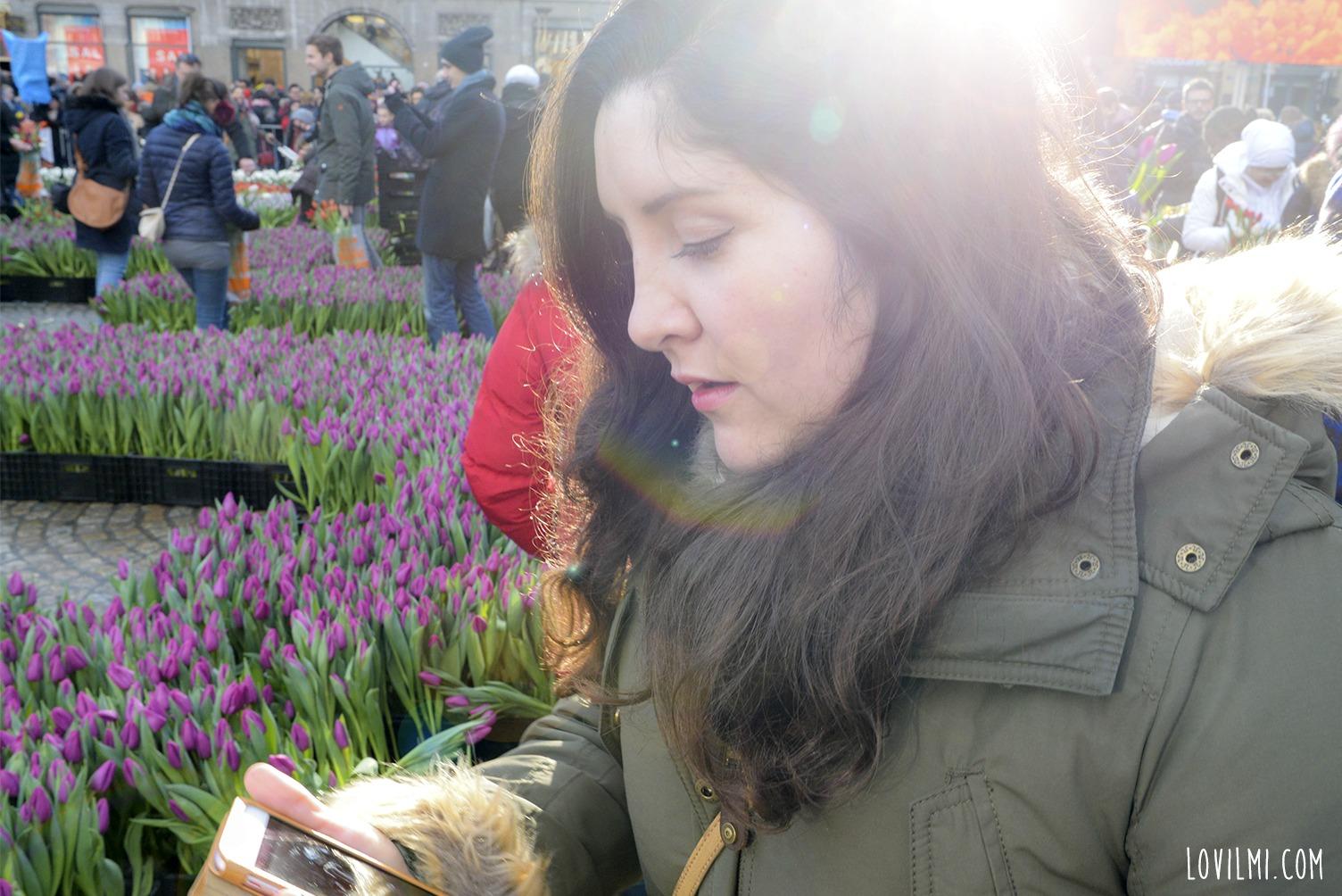 tulipan42